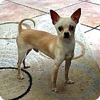 Adopt A Pet :: Tiny Boy - Tijeras, NM