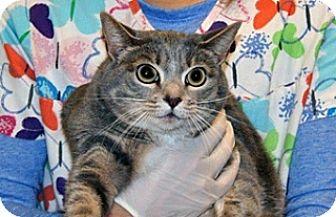 Domestic Mediumhair Cat for adoption in Wildomar, California - Polly Vinca