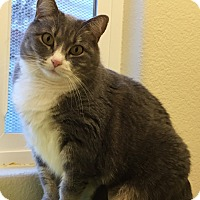 Adopt A Pet :: Samara - Colorado Springs, CO