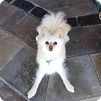 Adopt A Pet :: Nala 3987 - Toronto, ON