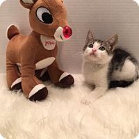 Adopt A Pet :: Delena - Pasadena, TX