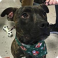 Adopt A Pet :: Gunner (2)-adoption pending - Schaumburg, IL