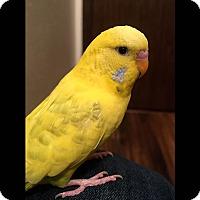 Adopt A Pet :: Elise - Pasco, WA