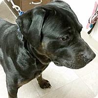 Adopt A Pet :: Uboo - Urbana, OH
