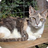 Adopt A Pet :: Cocoa - San Antonio, TX