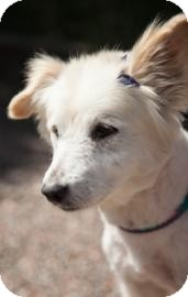 Terrier (Unknown Type, Medium) Mix Dog for adoption in Chandler, Arizona - Maddy