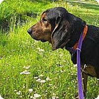 Adopt A Pet :: Boomer - St, Augustine, FL