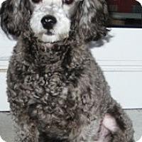 Adopt A Pet :: JayC - Dover, MA