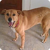Adopt A Pet :: Elle - Brattleboro, VT