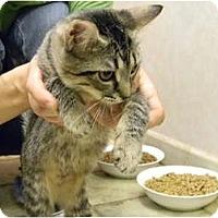 Adopt A Pet :: Katie - Bonita Springs, FL