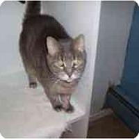 Adopt A Pet :: Tasha - Hamburg, NY
