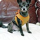 Adopt A Pet :: Calvin