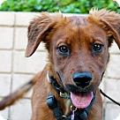 Adopt A Pet :: Adelaide