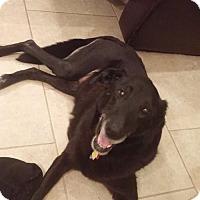 Adopt A Pet :: Rose - Charleston, SC
