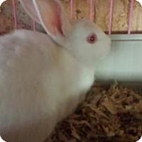 Adopt A Pet :: Pumpkin - Kenosha, WI