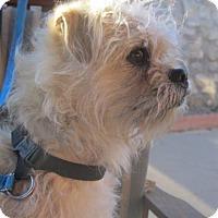 Adopt A Pet :: Tiggie - El Paso, TX