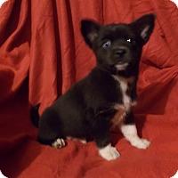 Adopt A Pet :: TREVOR - Savage, MD