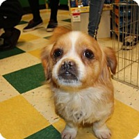 Adopt A Pet :: Leo - Morganville, NJ