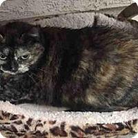 Adopt A Pet :: AMY - Sacramento, CA