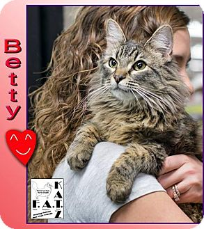 Domestic Longhair Cat for adoption in Albuquerque, New Mexico - Betty