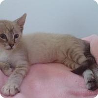 Adopt A Pet :: Mista - San Jose, CA