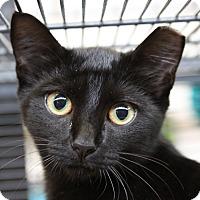 Adopt A Pet :: Celeste - Sarasota, FL