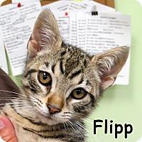 Adopt A Pet :: Flipp - Warren, PA