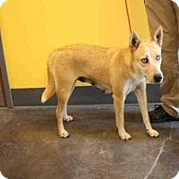 Adopt A Pet :: A025584 - Norman, OK