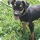 Adopt A Pet :: Sebastian (Has application)