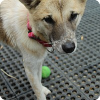 Adopt A Pet :: Lucas - Fullerton, CA