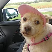 Adopt A Pet :: Moria Jo - Homer, NY