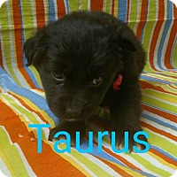 Adopt A Pet :: Taurus - Garden City, MI