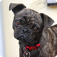 Adopt A Pet :: Thumbelina - Los Angeles, CA