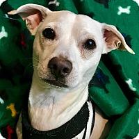 Adopt A Pet :: Buzz Aldrin - Cleveland, OH