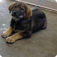 Adopt A Pet :: Afonso (adopted) - Decatur, GA