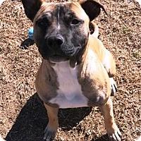 Adopt A Pet :: Cherry - Watauga, TX