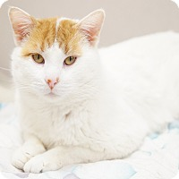 Adopt A Pet :: Hardy - Naperville, IL