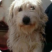 Adopt A Pet :: Haylee - Thousand Oaks, CA