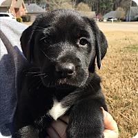 Adopt A Pet :: Tank (has been adopted) - Trenton, NJ