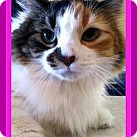 Adopt A Pet :: Princess - Omaha, NE