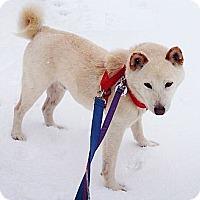 Adopt A Pet :: Kenjin - Centennial, CO