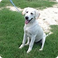 Adopt A Pet :: Maverick - Spring, TX