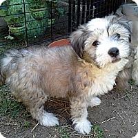 Adopt A Pet :: Rosco - San Dimas, CA