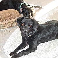 Adopt A Pet :: Gypsy - Ogden, UT