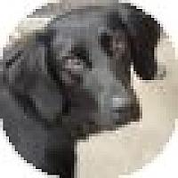 Adopt A Pet :: Bailey - Denver, CO