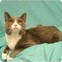 Adopt A Pet :: Cloudy - Sacramento, CA
