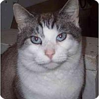 Adopt A Pet :: Ben - Delmont, PA