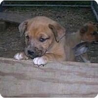 Adopt A Pet :: Monkey Perry - Glastonbury, CT