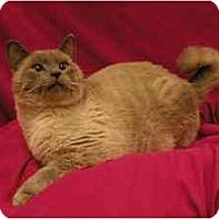 Adopt A Pet :: Skittles - Sacramento, CA