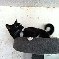 Adopt A Pet :: Snip - Monroe, CT